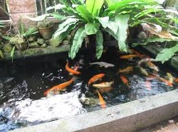 a glance at japanese koi gardens